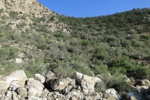 معدن سنگ کوه تودج۳