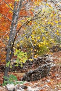 پاییز استهبان - در مسیر باغ جوزا