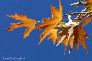 پاییز ۱