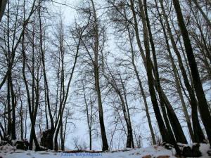 باغ جوزا - زمستان ۱۳۸۶