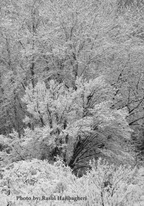 برف امروز استهبان - ۸ اسفندماه ۹۳ - باغ جوزا