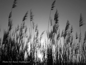طبیعت استهبان - کوه تودج