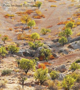 پاییز استهبان